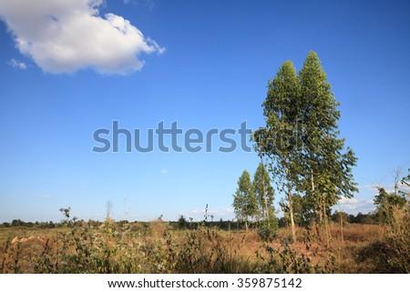 eucalyptus tree of make paper. - stock photo