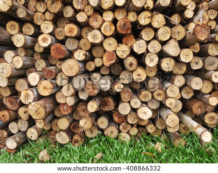 Eucalyptus tree, Pile of wood logs ready for industry - stock photo