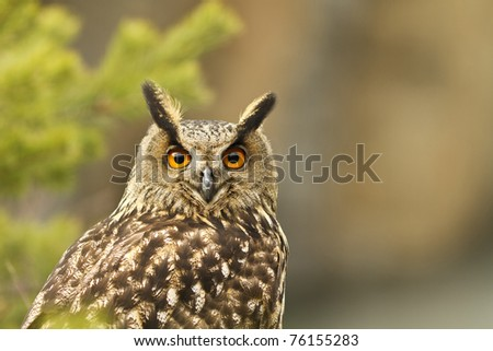 Eurasian Eagle Owl - stock photo