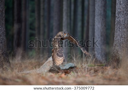 Eurasian Eagle Owl (Bubo Bubo) flying in the forest, close-up, wildlife photo. - stock photo