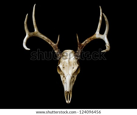 European Deer Mount Isolated on Black - stock photo