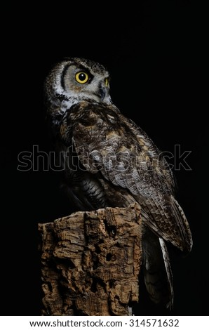 European Eagle Owl (Bubo bubo) perched on tree stump, copy space to left - stock photo
