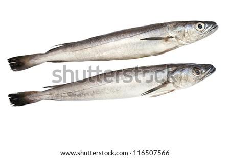 European hake fish isolated over white background - stock photo