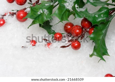 european holly in white snow - stock photo