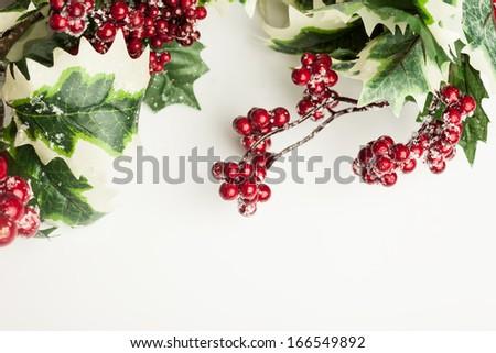 european holly on white background - stock photo