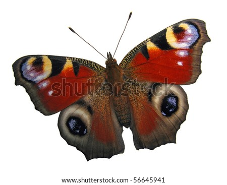 European peacock butterfly isolated on white - stock photo