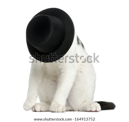 European Shorthair kitten sitting, hiding its face in a top hat, 4 months old, isolated on white - stock photo