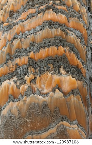 Evaporites, soluble rocks caused by the evaporation of water from an ancient sea - stock photo