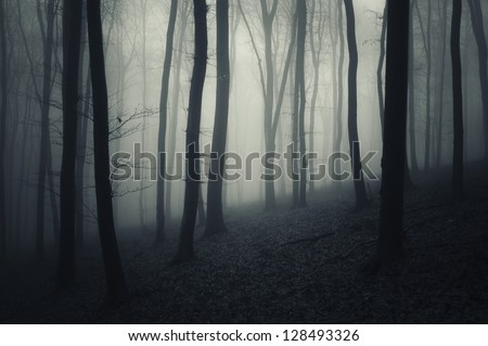 evening in a dark forest with fog - stock photo