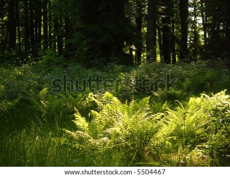 evening lights in forest