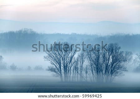 Evening mist on a field with leafless trees