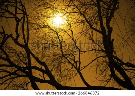 Evening Nature backdrop abstract tree with dry dead branches background against sunset rays Sun light through trunk Dark outdoor silhouette on clear dusk sky Season photo late Autumn fall  - stock photo