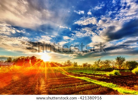 Evening sky and sunset over allotment in spring time - stock photo