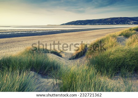 Evening Summer landscape over grassy sand dunes on beach with Instagram effect filter - stock photo