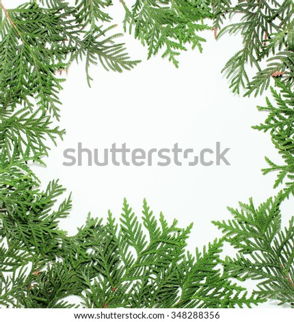 ever green fir tree decoration for christmas card isolated, new year pattern, copyspace white - stock photo