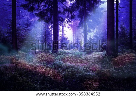 Evergreen forest early in the morning - stock photo
