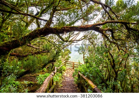 Evergreen forest in Garajonay national park with viewpoint terrace on La Gomera island in Spain - stock photo