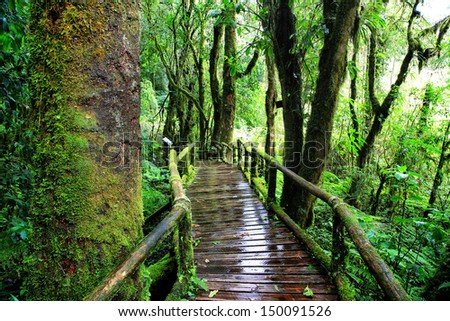 Evergreen Forest of Doi Inthanon, Chiang Mai, Thailand  - stock photo