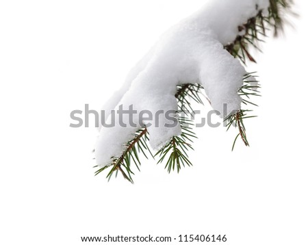 Evergreen pine tree branch covered with fluffy snow isolated on a white background - stock photo