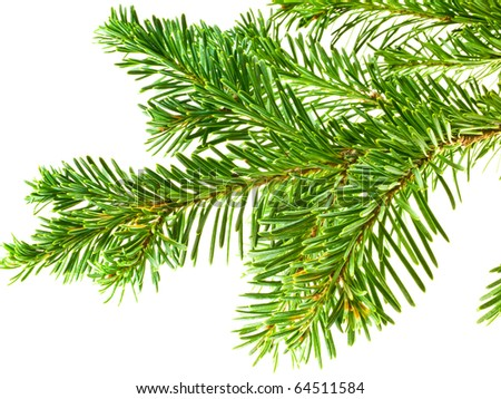 Green Fluffy Pine Branch Isolated On Stock Vector ... Evergreen Branch
