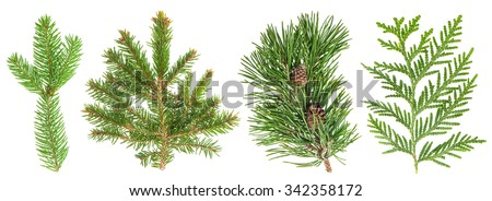 Evergreen tree branch set isolated on white background. Coniferous plants spruce, pine, thuja, fir, fur - stock photo