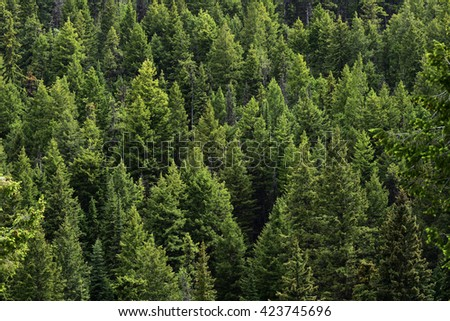 Evergreen Tree Stock Images RoyaltyFree Images Vectors