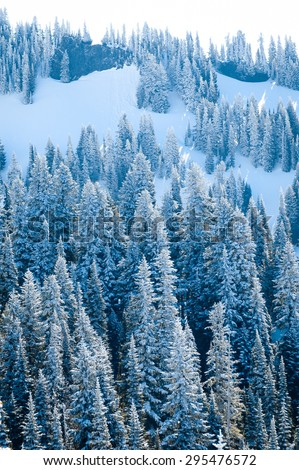 Evergreen Trees at Mount Rainier National Park - stock photo