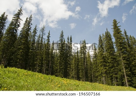 Evergreen trees in front of a mountain under a lightly clouded blue sky. - stock photo