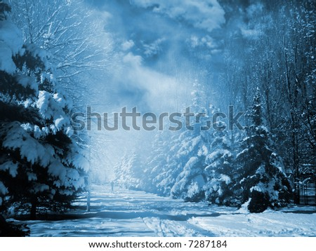 Evergreens at snowy winter park in the night.  Special toned photo f/x. - stock photo