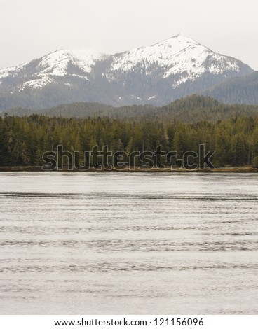 Evergreens on the coast of an Alaskan waterway with Snow topped mountains in the background