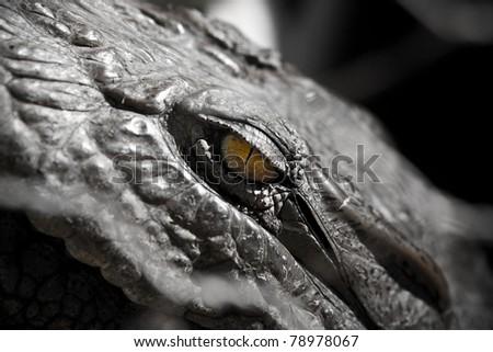 Evil Alligator Eye - stock photo