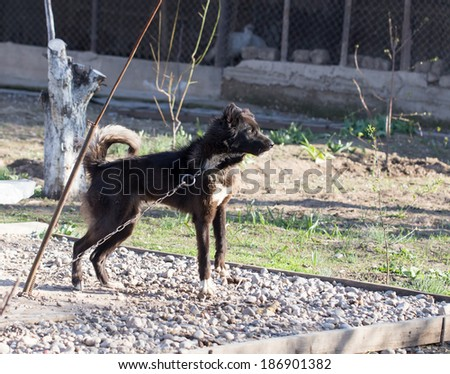 vicious dog stock photos images amp pictures shutterstock