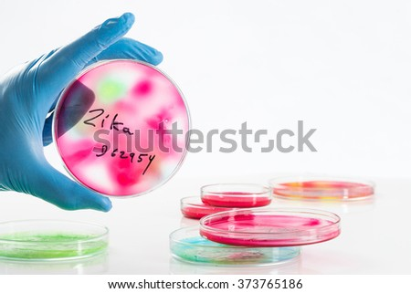 examining solution in petri dish and test tub at a laboratory looking for positively    or negatively reaction to zika virus - stock photo