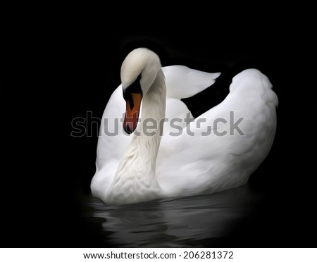 Excellent portrait of a whooping swan on water, isolated on black background. White swan with orange beak in twilight. Wild beauty of a beautiful web foot bird. Amazing picture in oil painting style. - stock photo