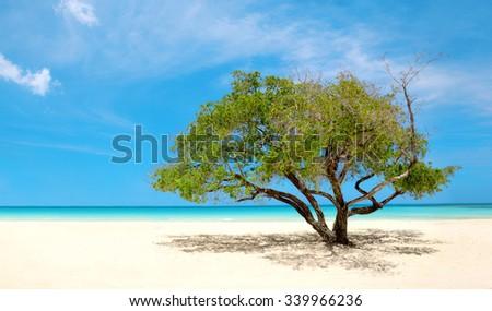 Exotic Beach in Dominican Republic, punta cana - stock photo