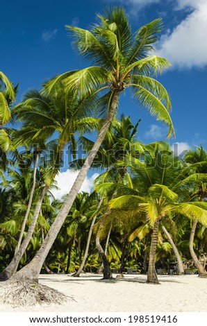 Exotic beach with a lot of palm trees - stock photo