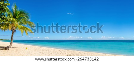 Exotic beach with gold sand, coconut palm tree and deep blue sky, Caribbean Islands