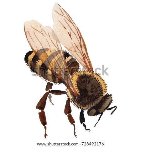 Exotic Bee Wild Insect In A Watercolor Style Isolated Full Name Of The