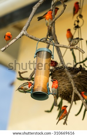 Exotic bird sitting on the bird feeder - stock photo