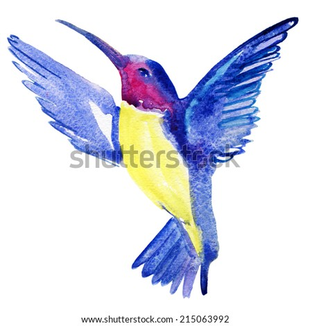 exotic bird. watercolor sketch of a hummingbird - stock photo