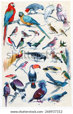 Exotic birds, vintage engraved illustration. La Vie dans la nature, 1890.  - stock photo