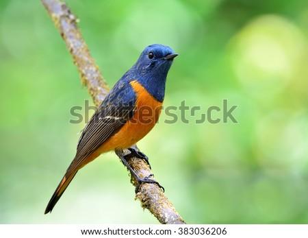 Blue and orange bird logo - photo#23