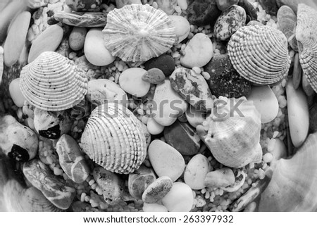 exotic bottom of the sea or ocean with various and multicolored underwater cockleshells and stones closeup of monochrome tone - stock photo