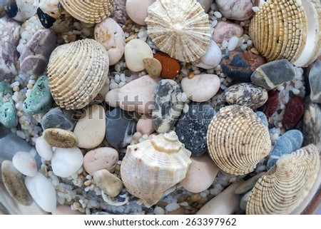 exotic bottom of the sea or ocean with various and multicolored underwater cockleshells and stones closeup - stock photo