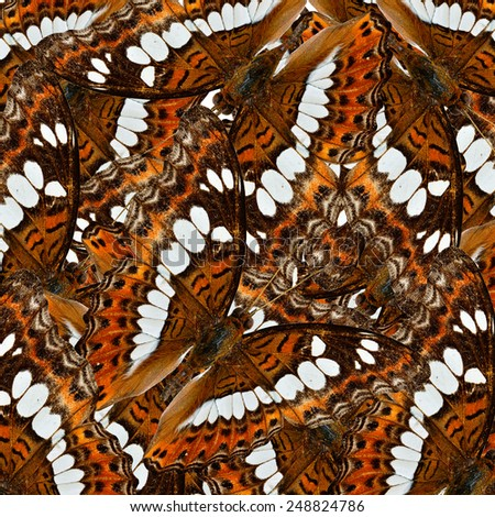 Exotic brown background texture made of Common Commander butterflies - stock photo