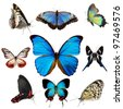 Exotic butterflies collection isolated on white - stock photo