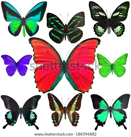 Exotic butterflies collection isolated on white background - stock photo
