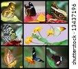 exotic butterflies mosaic - stock photo