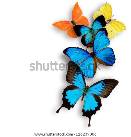 Exotic butterflies over white - stock photo