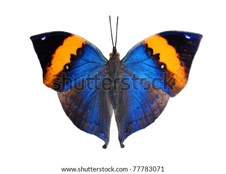 exotic butterfly isolated on white background - stock photo